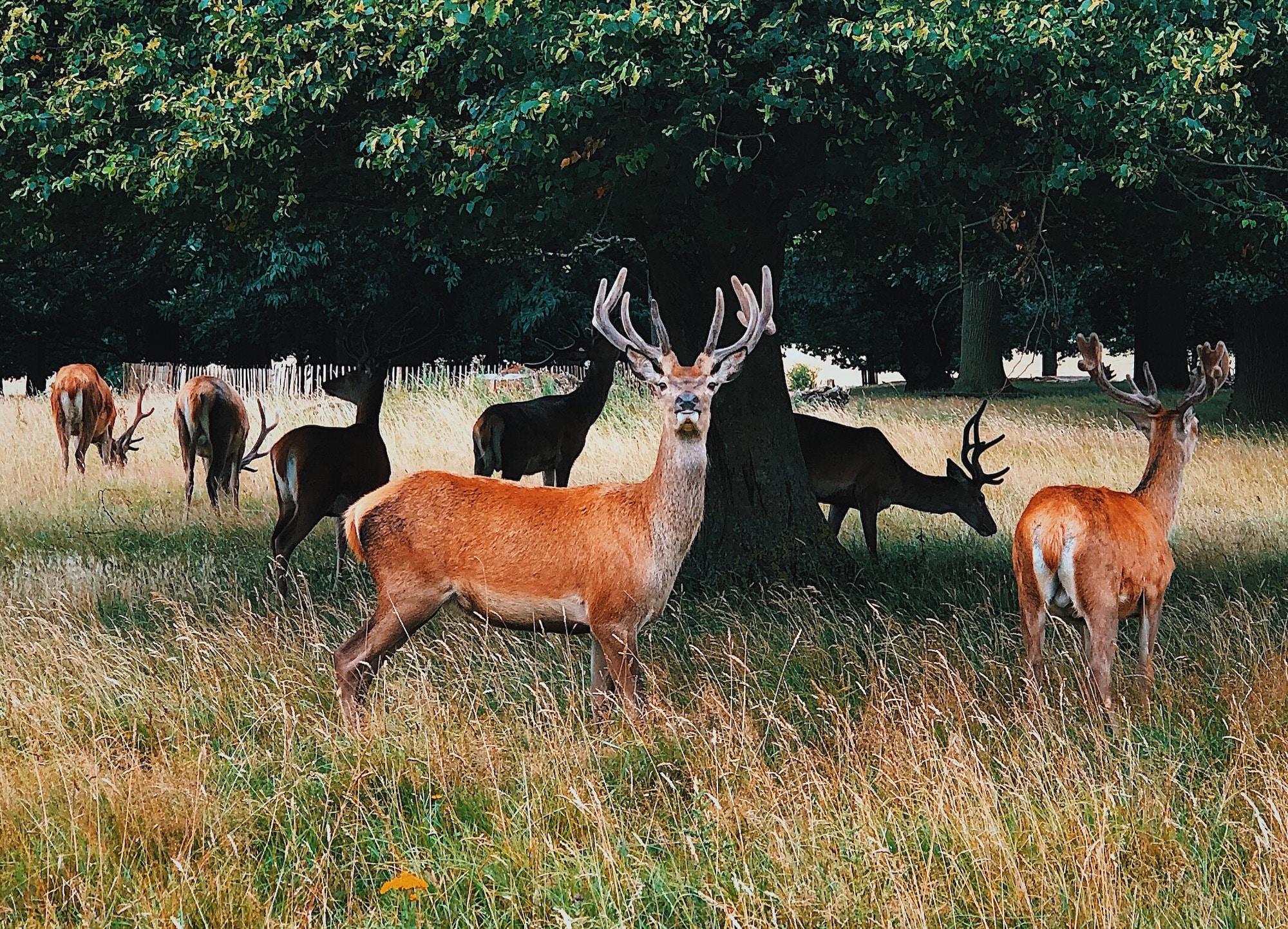 Hirschpark Nienstedten